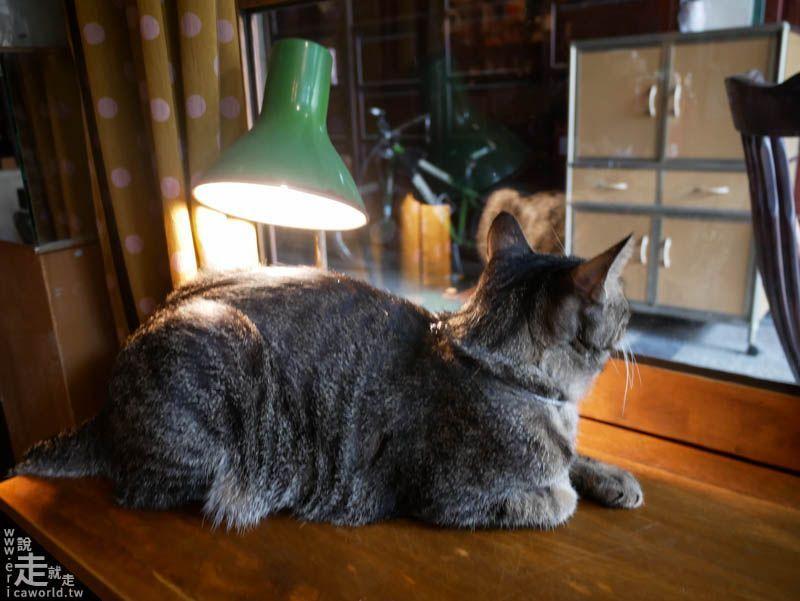 秘氏咖啡 貓